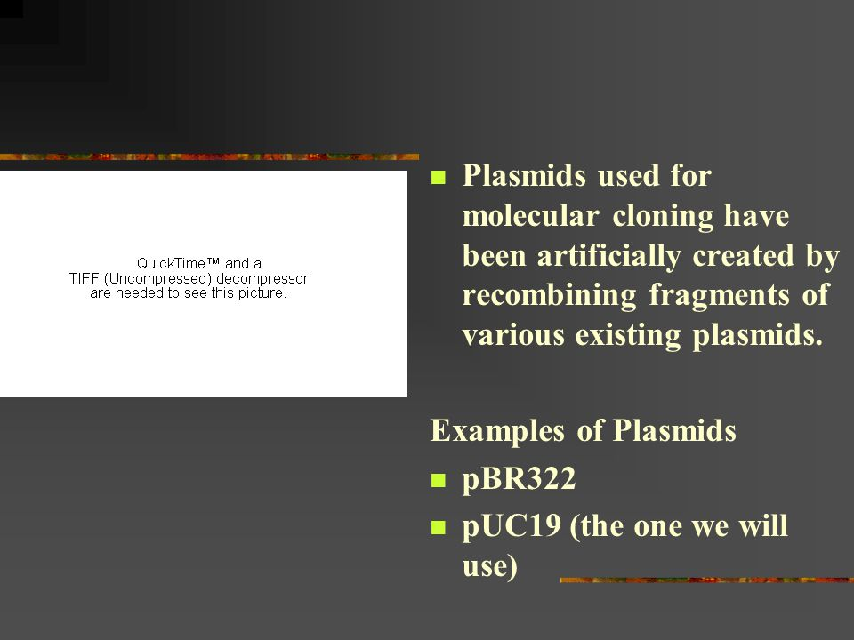 Plasmids used for molecular cloning have been artificially created by recombining fragments of various existing plasmids.