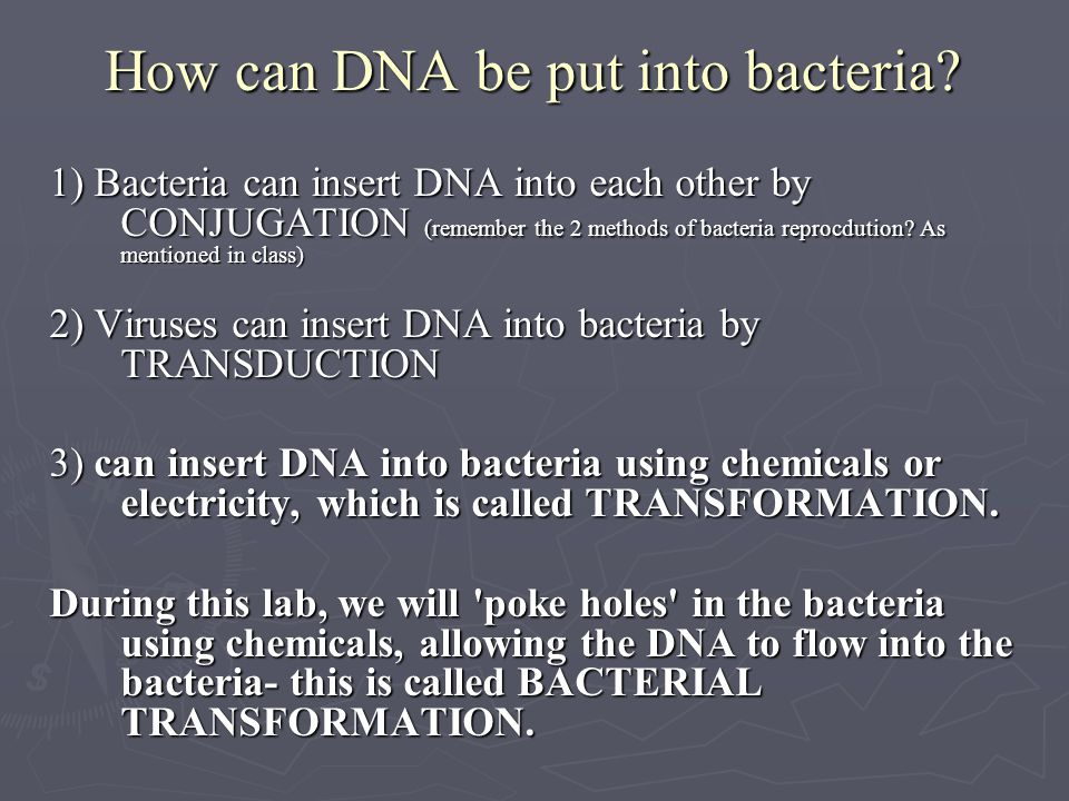 How can DNA be put into bacteria