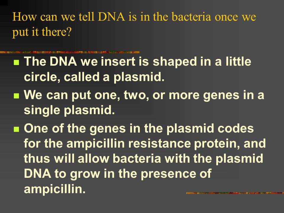 How can we tell DNA is in the bacteria once we put it there