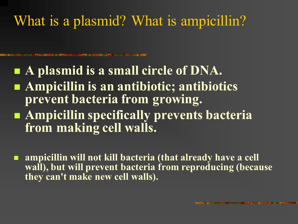 What is a plasmid What is ampicillin