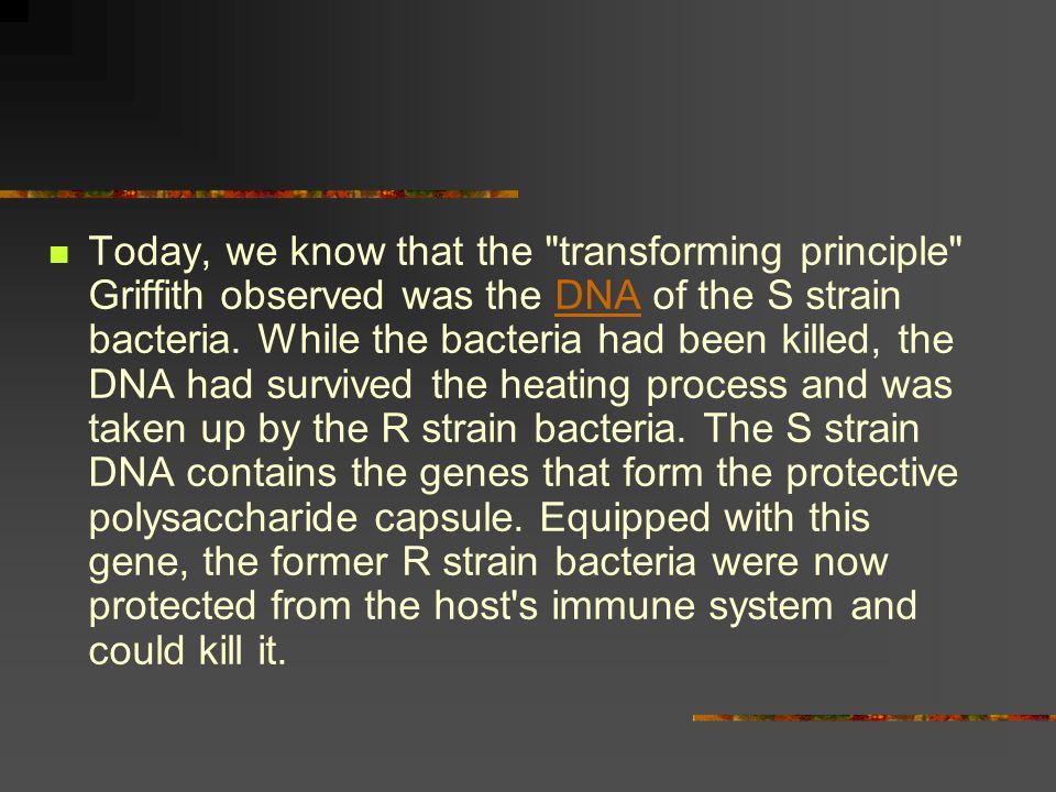 Today, we know that the transforming principle Griffith observed was the DNA of the S strain bacteria.
