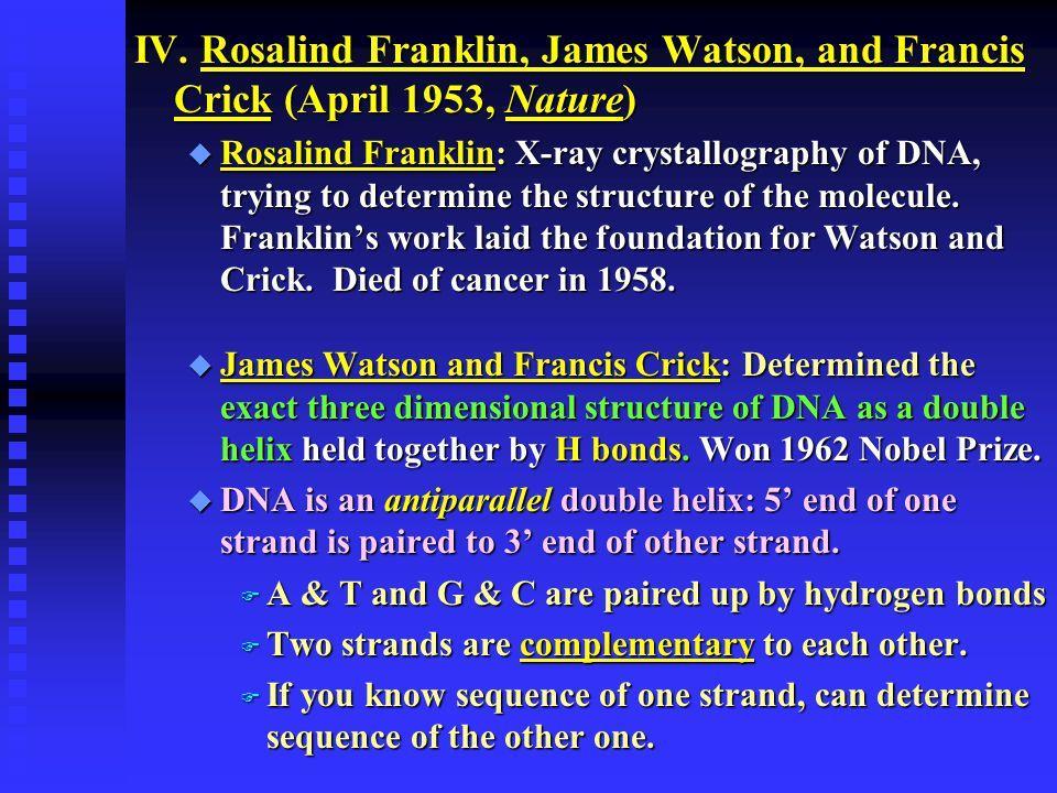 IV. Rosalind Franklin, James Watson, and Francis Crick (April 1953, Nature)