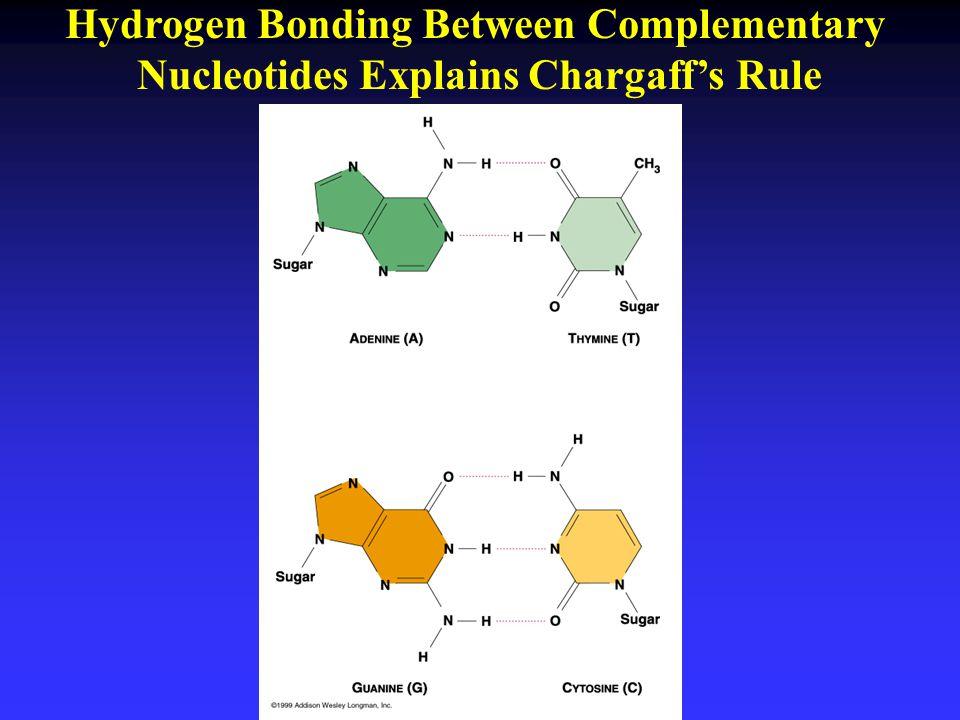 Hydrogen Bonding Between Complementary
