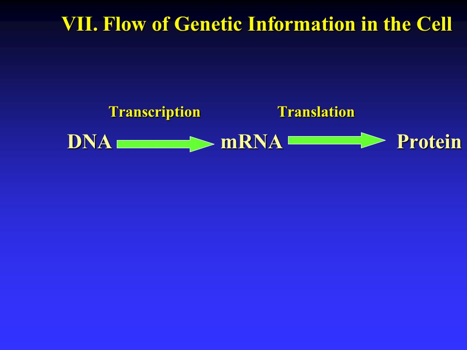 VII. Flow of Genetic Information in the Cell
