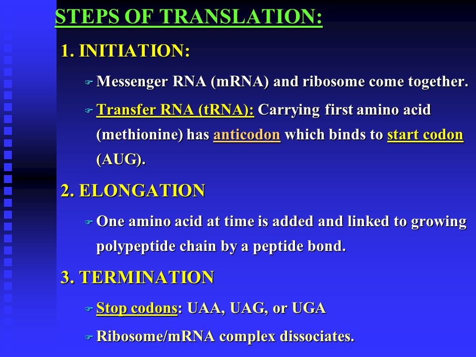 STEPS OF TRANSLATION: 1. INITIATION: 2. ELONGATION 3. TERMINATION