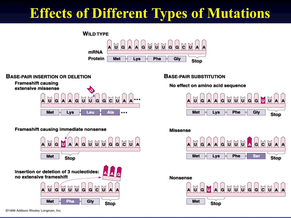 Effects of Different Types of Mutations