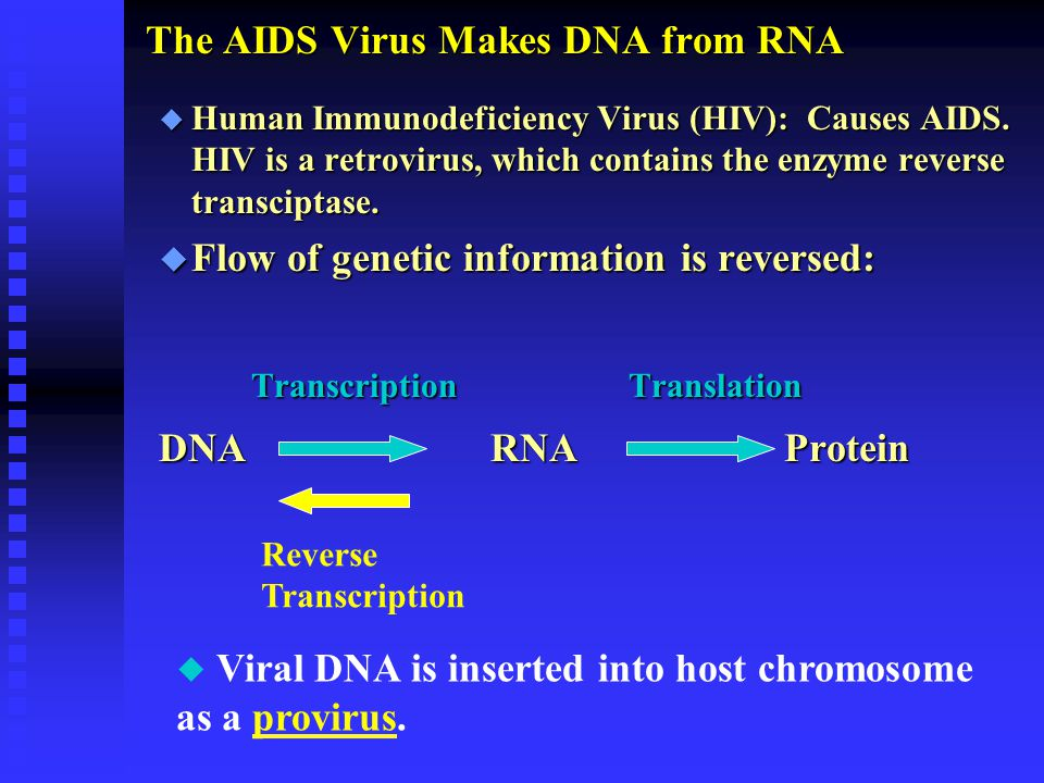 The AIDS Virus Makes DNA from RNA