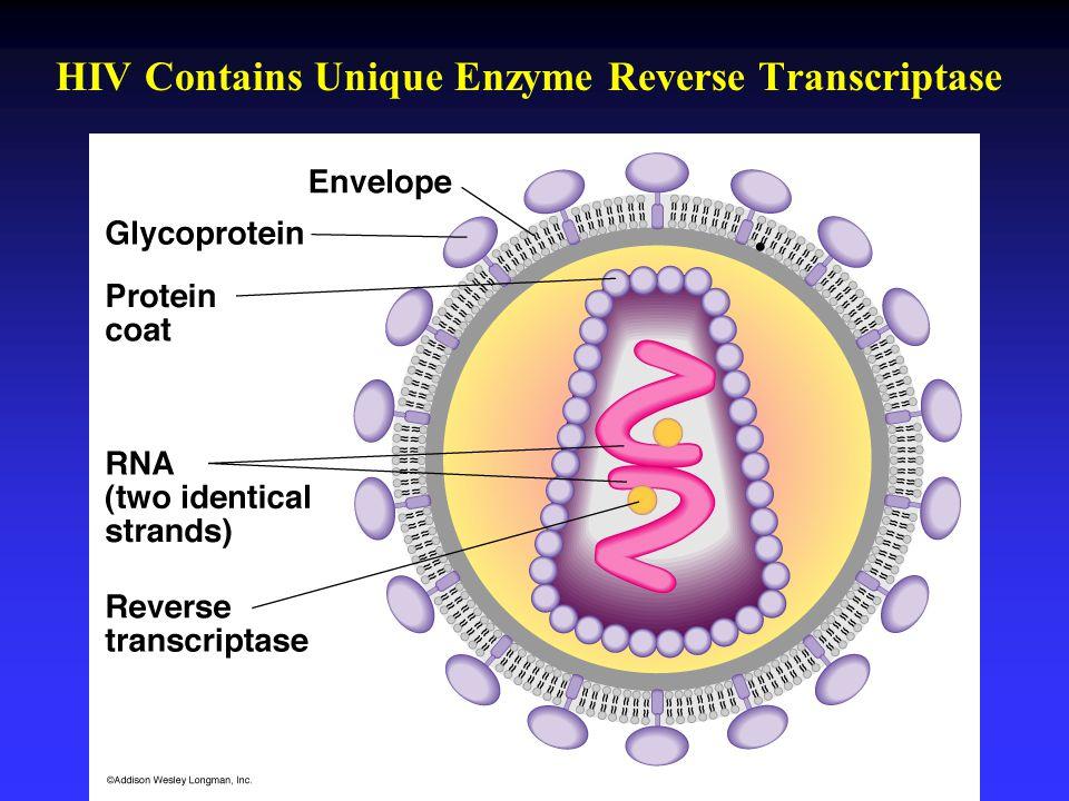 HIV Contains Unique Enzyme Reverse Transcriptase