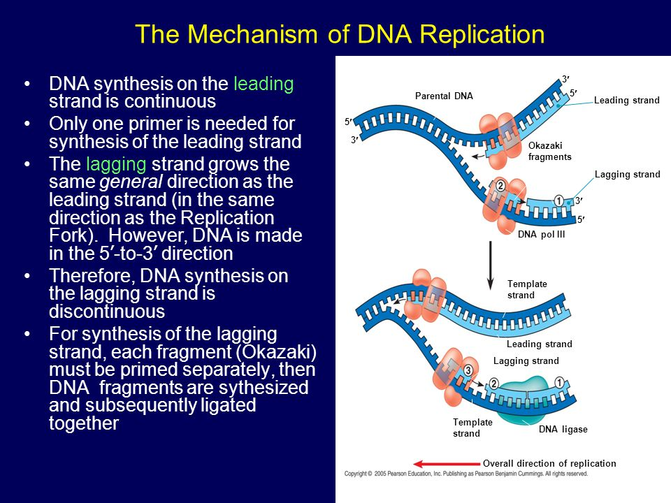 The Mechanism of DNA Replication