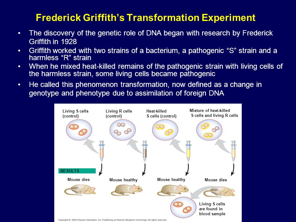 Frederick Griffith's Transformation Experiment