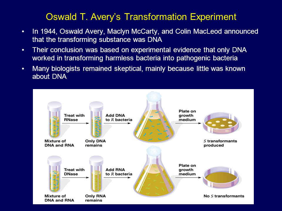 Oswald T. Avery's Transformation Experiment