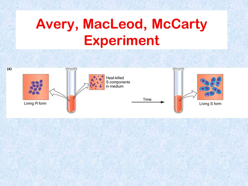 Avery, MacLeod, McCarty Experiment