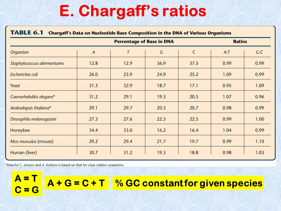 E. Chargaff's ratios A = T C = G A + G = C + T