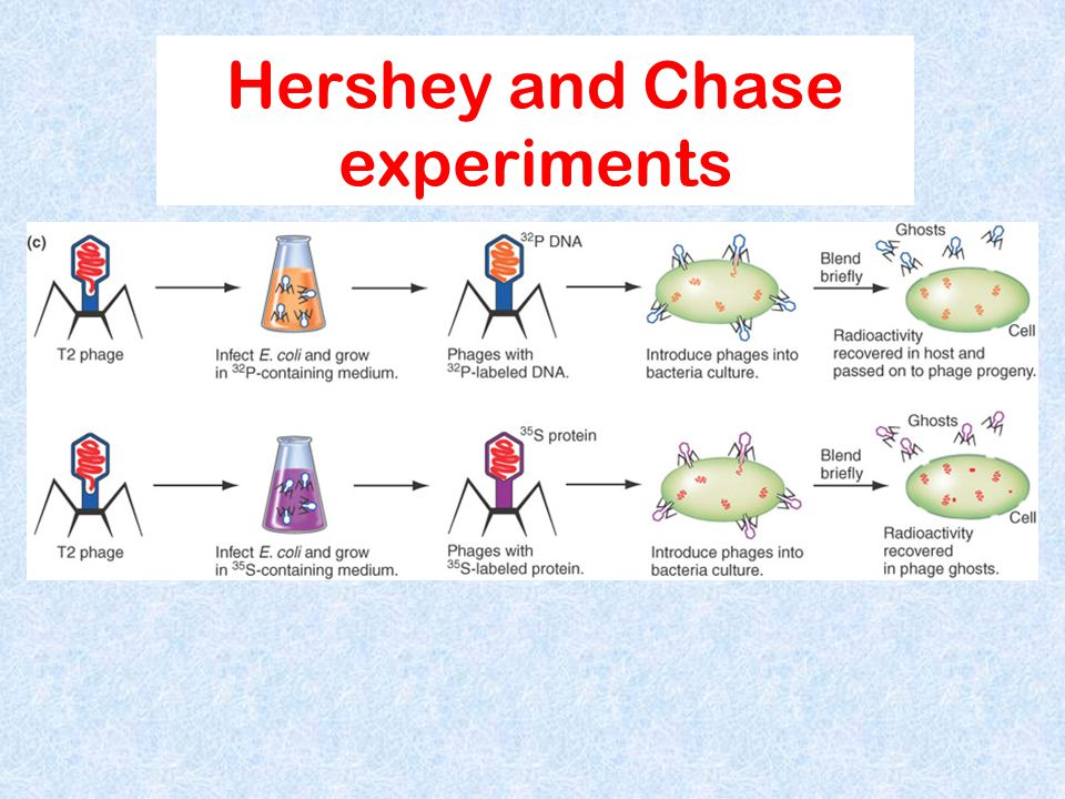 Hershey and Chase experiments