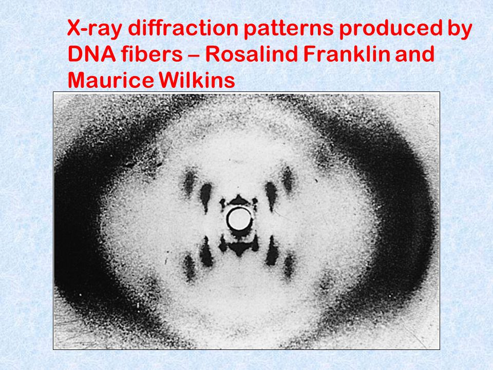 X-ray diffraction patterns produced by DNA fibers – Rosalind Franklin and Maurice Wilkins
