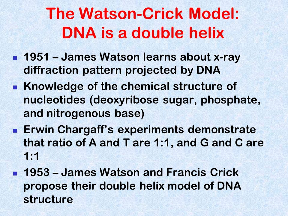 The Watson-Crick Model: DNA is a double helix