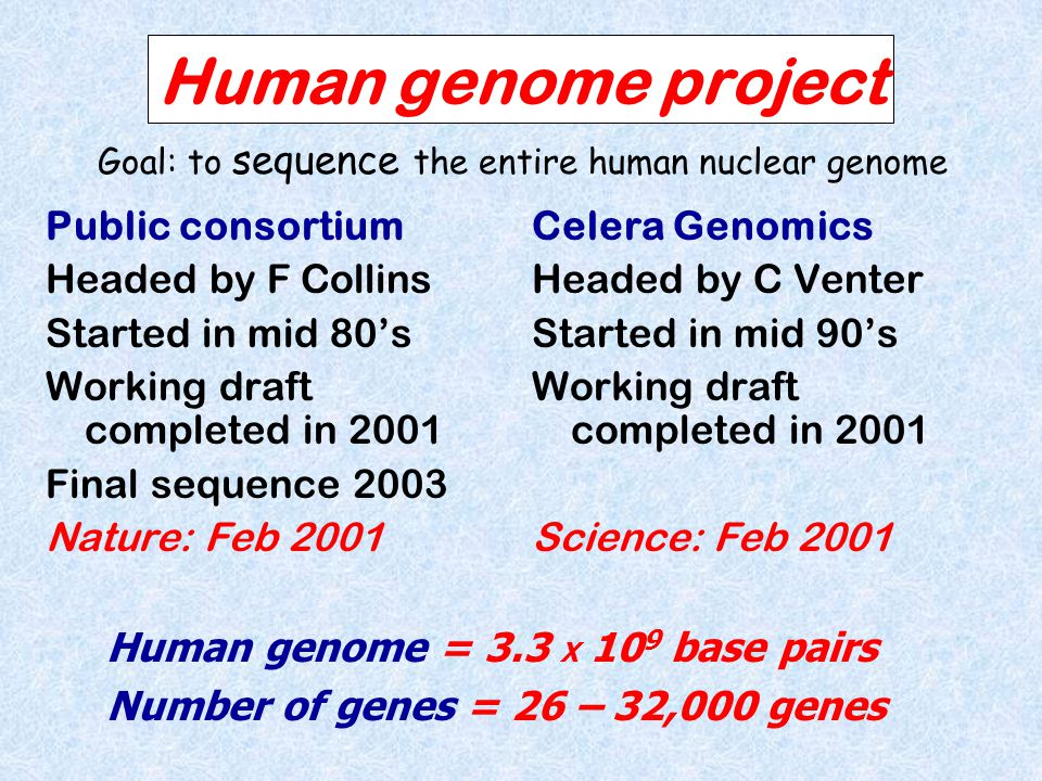 Human genome project Public consortium Headed by F Collins