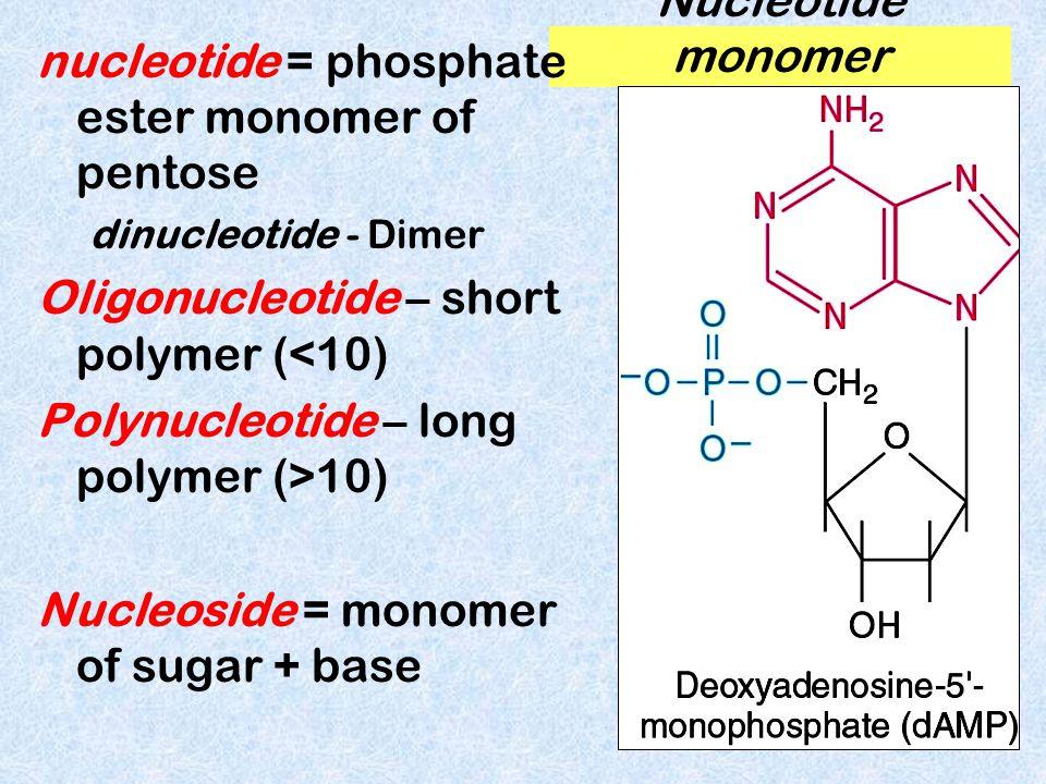 nucleotide = phosphate ester monomer of pentose