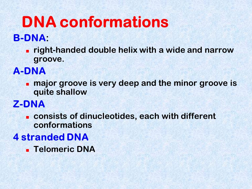 DNA conformations B-DNA: A-DNA Z-DNA 4 stranded DNA