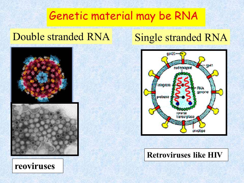 Genetic material may be RNA