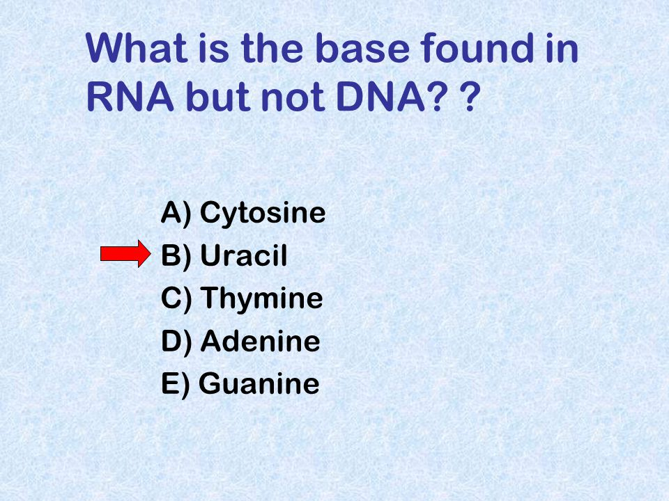 What is the base found in RNA but not DNA