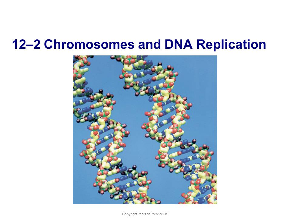 12-2 Chromosomes and DNA Replication