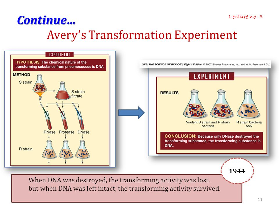 Continue… Avery's Transformation Experiment