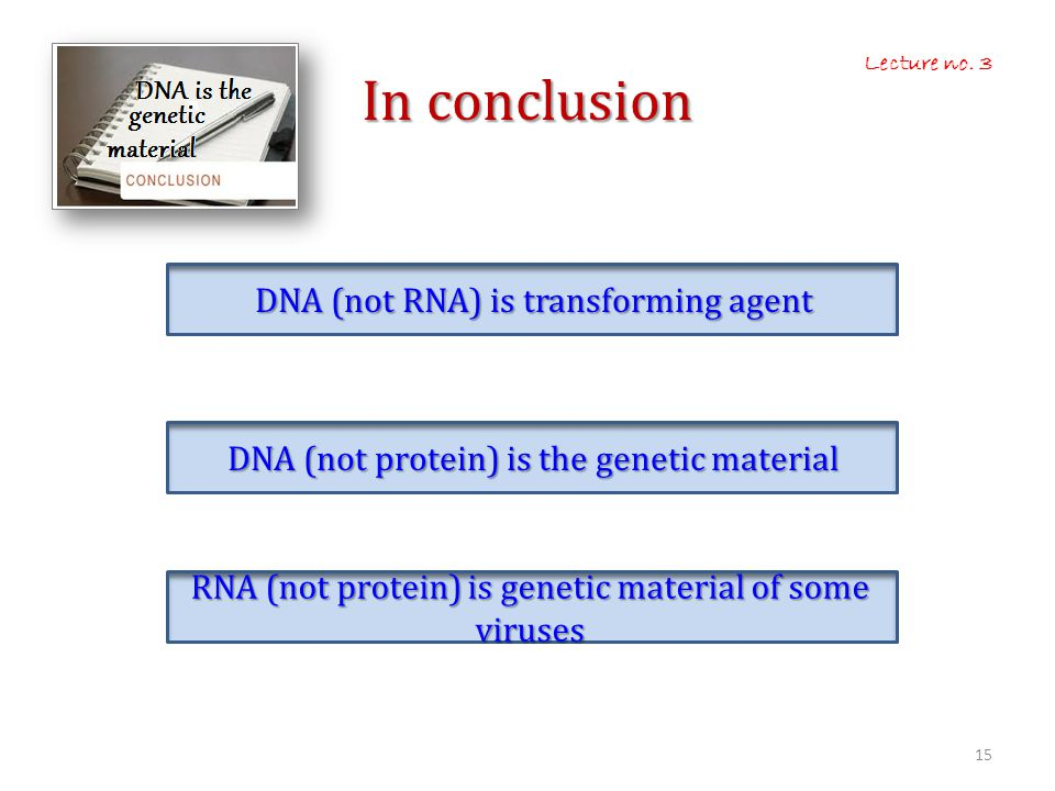In conclusion DNA (not RNA) is transforming agent