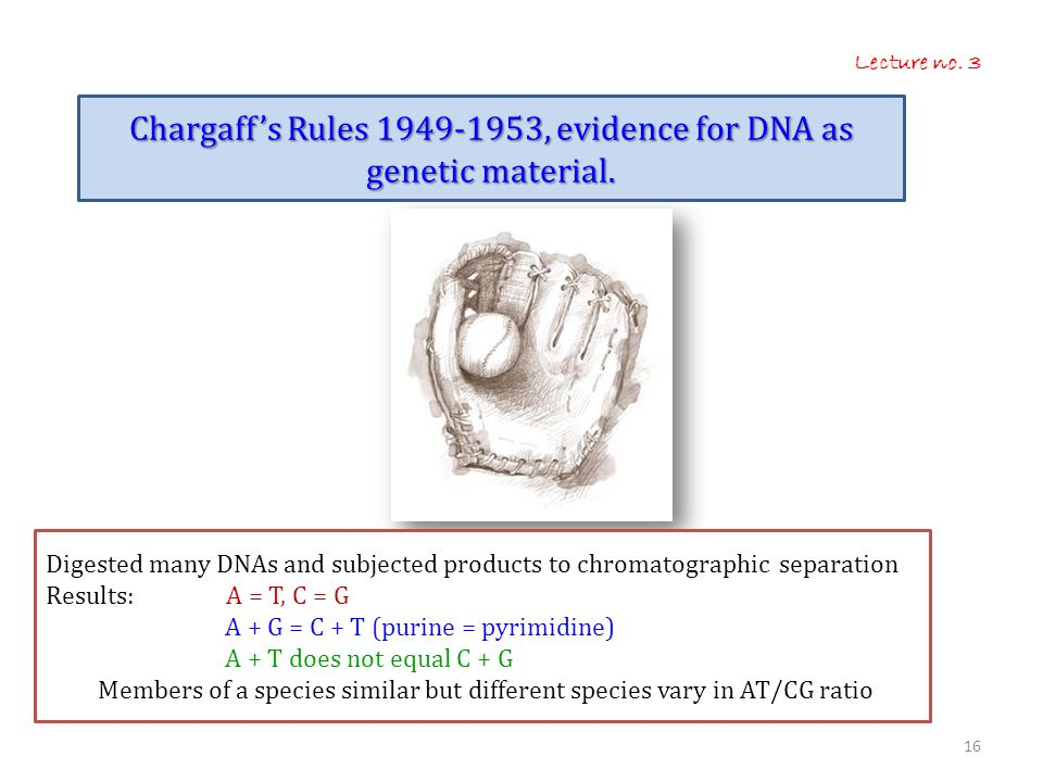 Chargaff's Rules 1949-1953, evidence for DNA as genetic material.