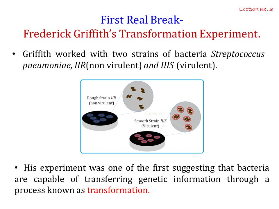 First Real Break- Frederick Griffith's Transformation Experiment.