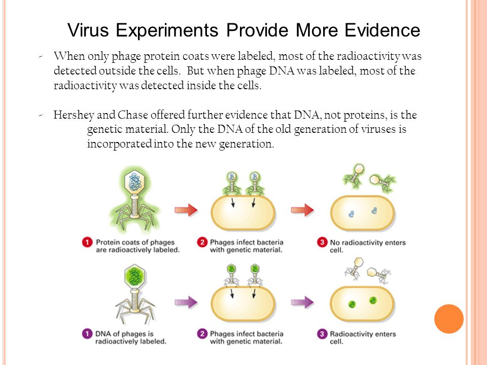 Virus Experiments Provide More Evidence