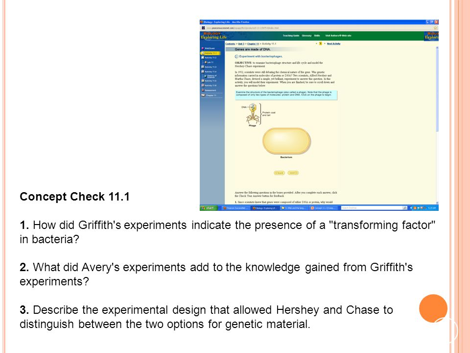 Concept Check 11.1 1. How did Griffith s experiments indicate the presence of a transforming factor in bacteria