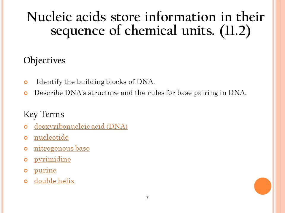 Nucleic acids store information in their sequence of chemical units