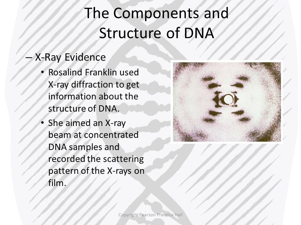 The Components and Structure of DNA