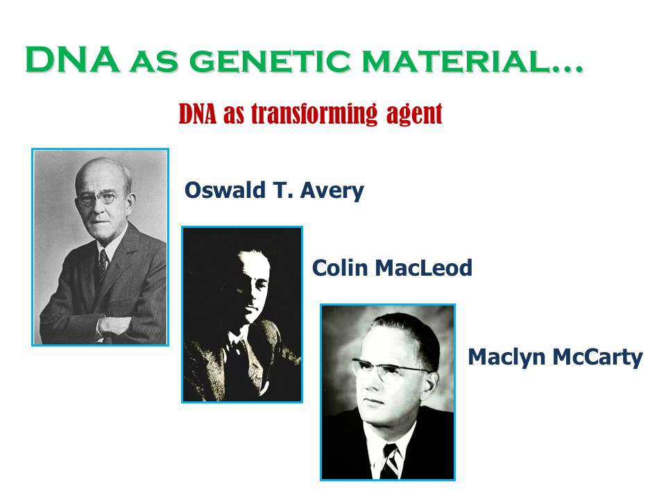 DNA as transforming agent