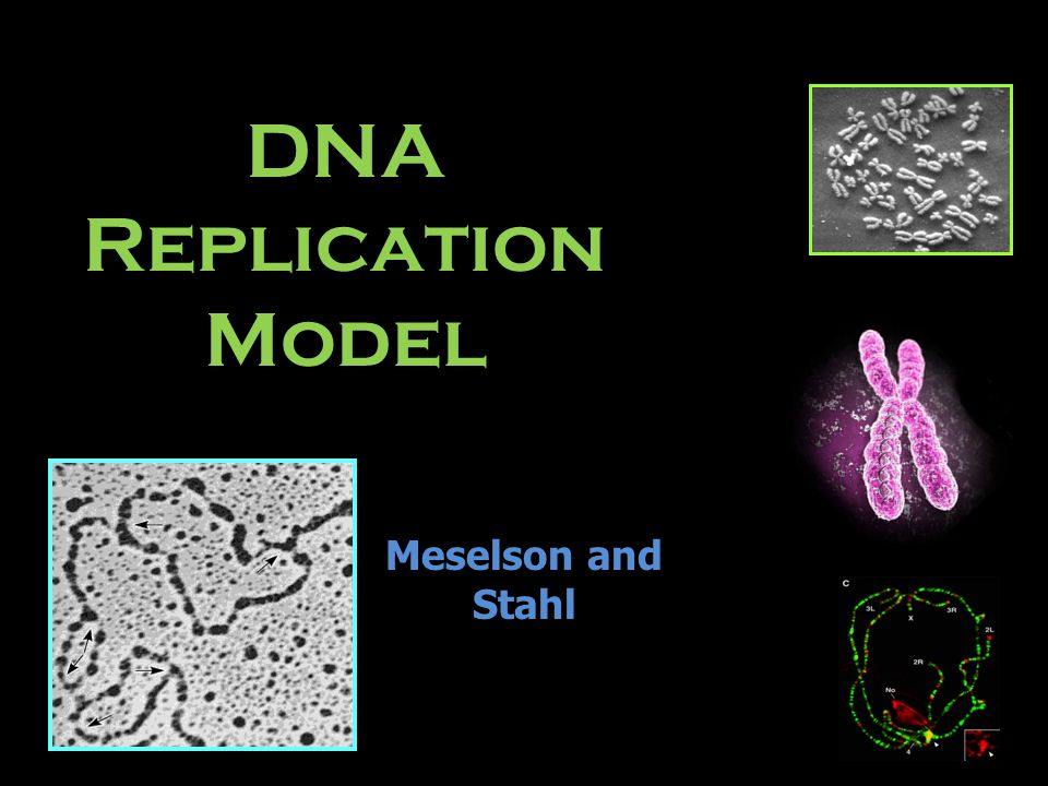 DNA Replication Model Meselson and Stahl