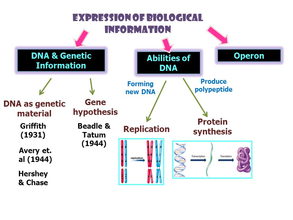 DNA & Genetic Information DNA as genetic material