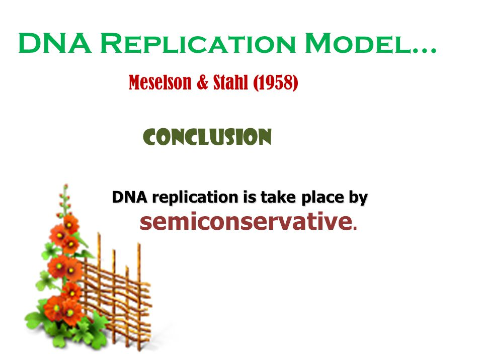 DNA replication is take place by semiconservative.