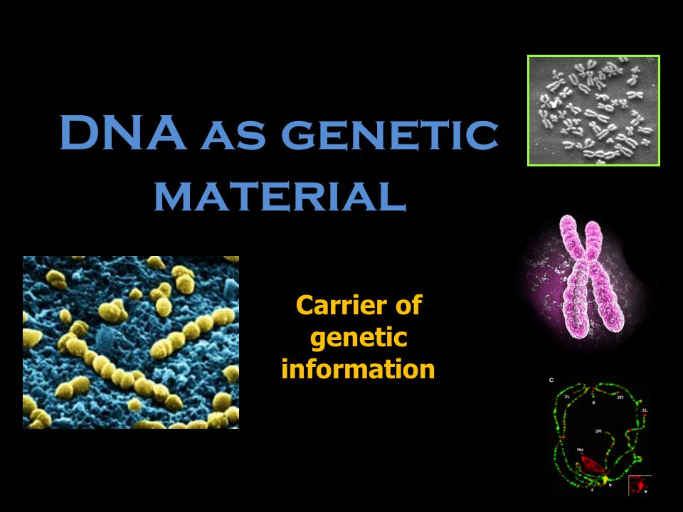 Carrier of genetic information