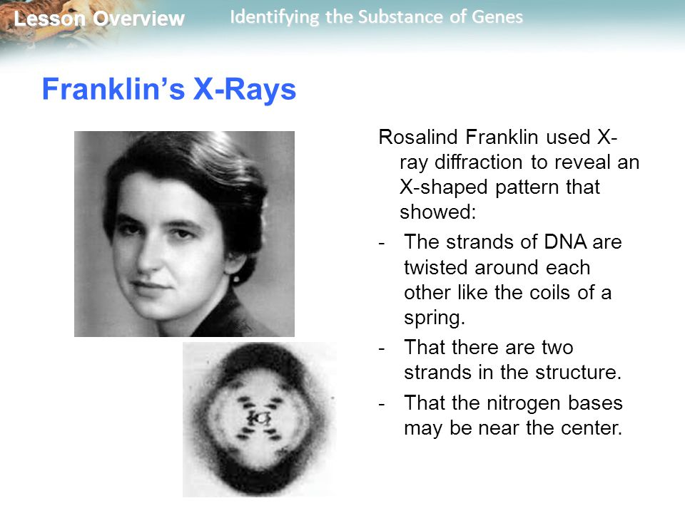 Franklin's X-Rays Rosalind Franklin used X-ray diffraction to reveal an X-shaped pattern that showed: