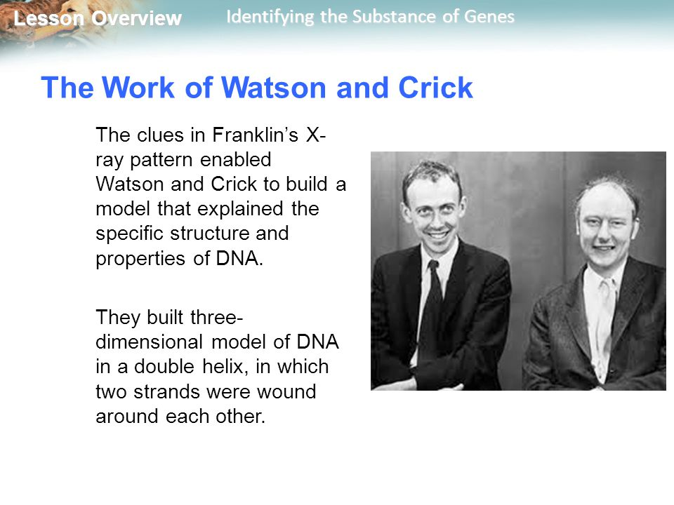 The Work of Watson and Crick