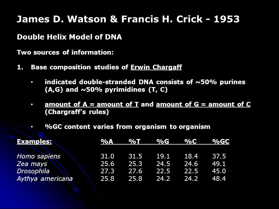 James D. Watson & Francis H. Crick - 1953