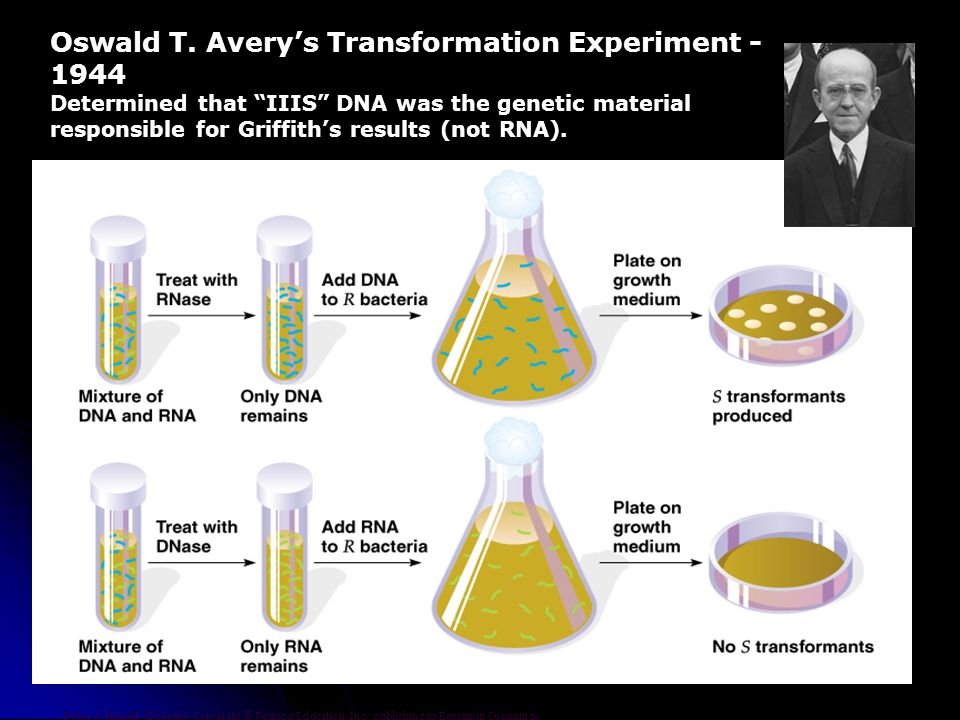 Oswald T. Avery's Transformation Experiment - 1944