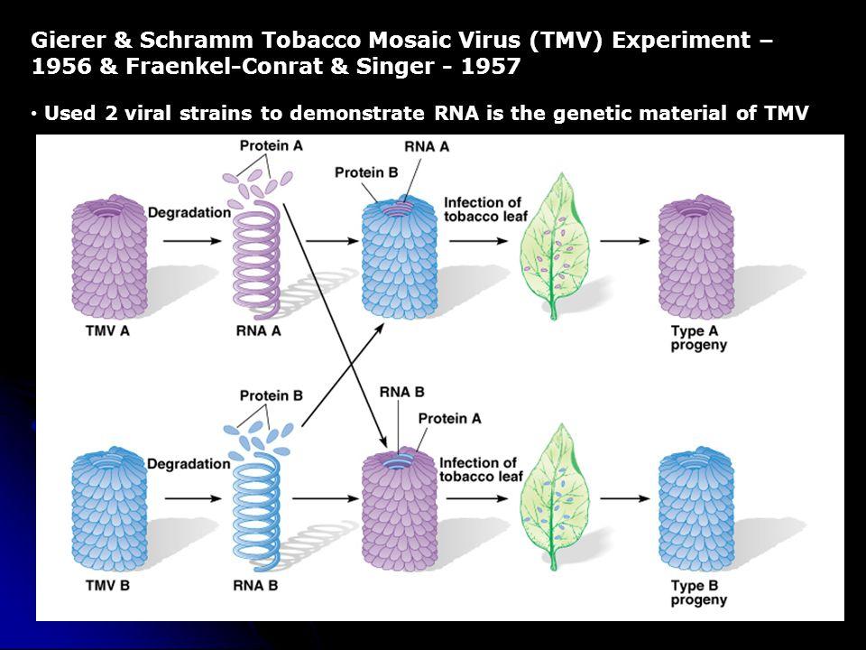 Gierer & Schramm Tobacco Mosaic Virus (TMV) Experiment – 1956 & Fraenkel-Conrat & Singer - 1957