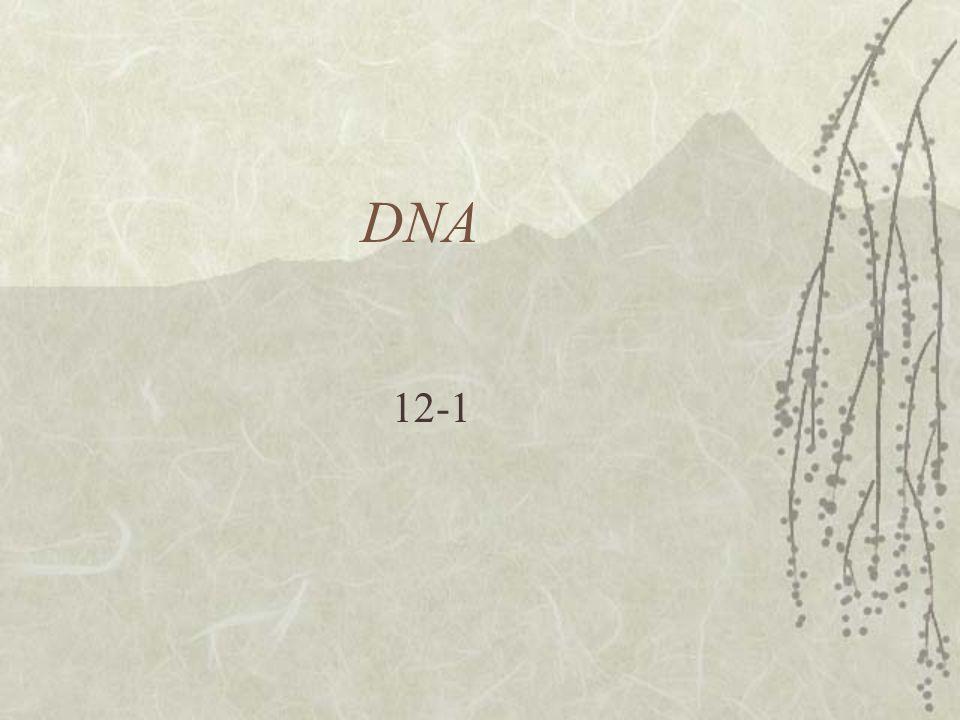 DNA 12-1