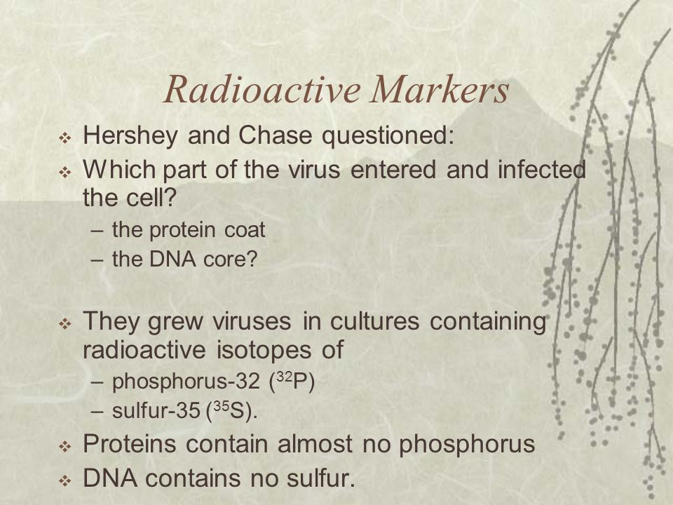 Radioactive Markers Hershey and Chase questioned: