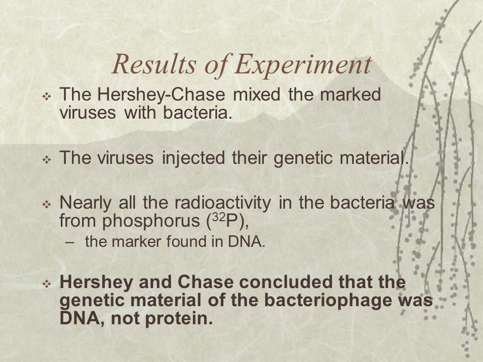 Results of Experiment The Hershey-Chase mixed the marked viruses with bacteria. The viruses injected their genetic material.