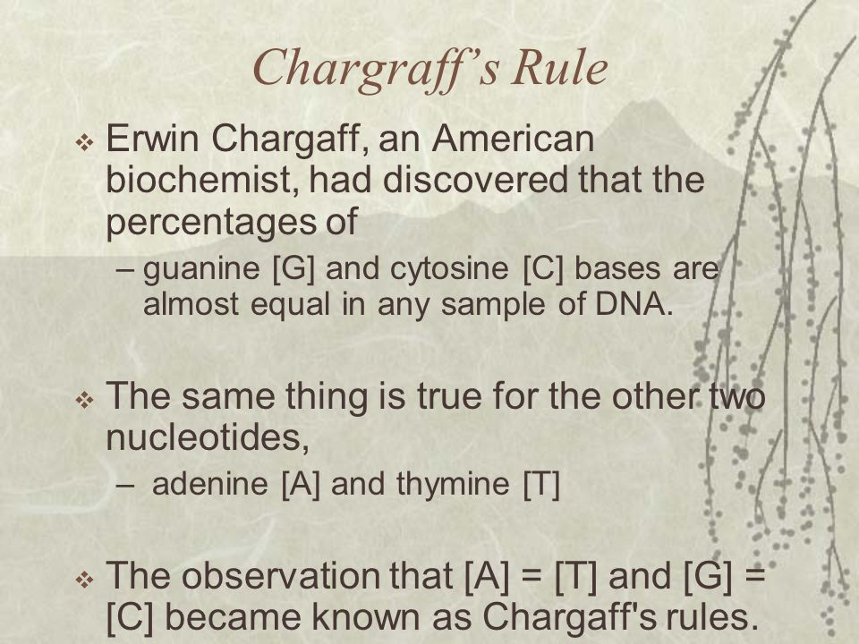 Chargraff's Rule Erwin Chargaff, an American biochemist, had discovered that the percentages of.