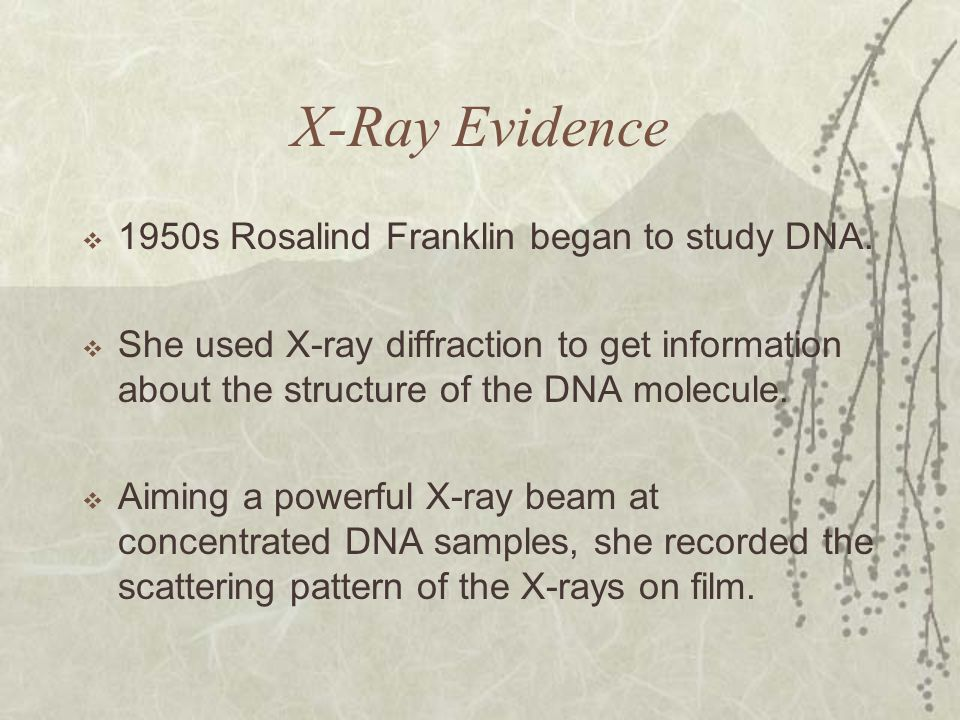 X-Ray Evidence 1950s Rosalind Franklin began to study DNA.