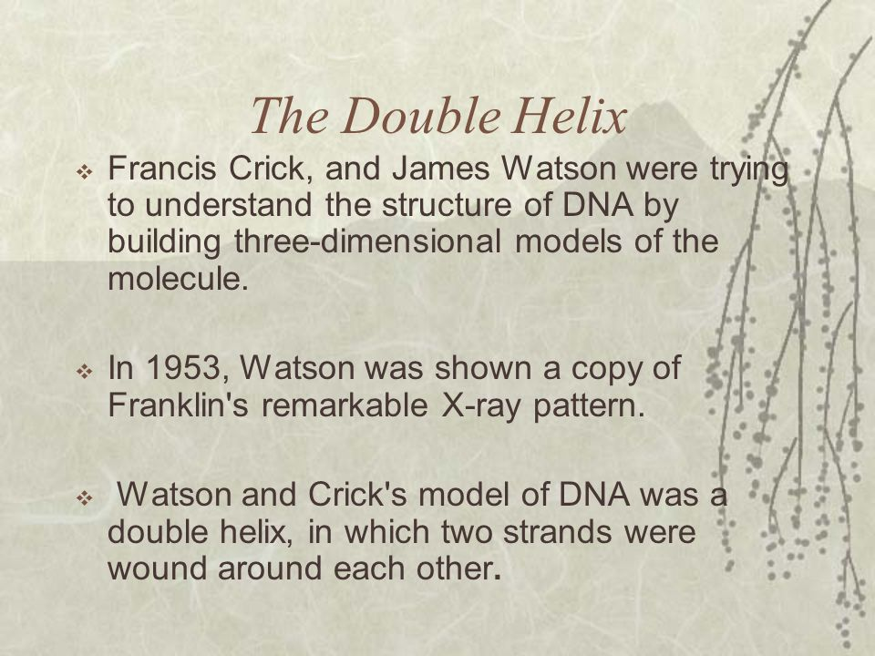 The Double Helix Francis Crick, and James Watson were trying to understand the structure of DNA by building three-dimensional models of the molecule.